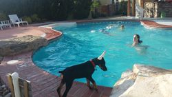 at the pool, licking everyone's head